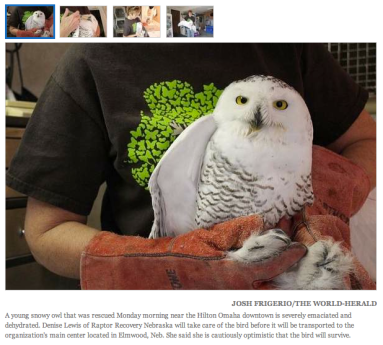 Omaha owl rescue